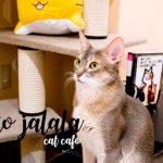 neko jalala คาเฟ่แมวที่ Akihabara