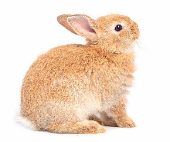 กระต่าย...สัตว์น้อยน่ารัก