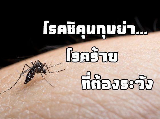 โรคชิคุนกุนย่า...โรคร้ายที่ต้องระวัง