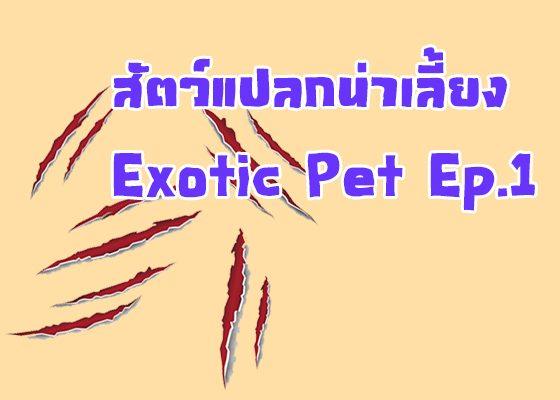 สัตว์แปลกน่าเลี้ยง Exotic Pet Ep.1