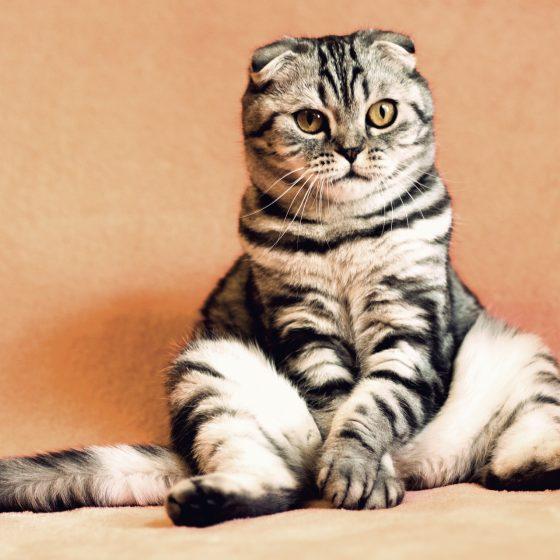 มีสัตว์เลี้ยงคู่ใจช่วยส่งเสริมสุขภาพจิตให้ดีขึ้น เกร็ดความรู้รอบตัว