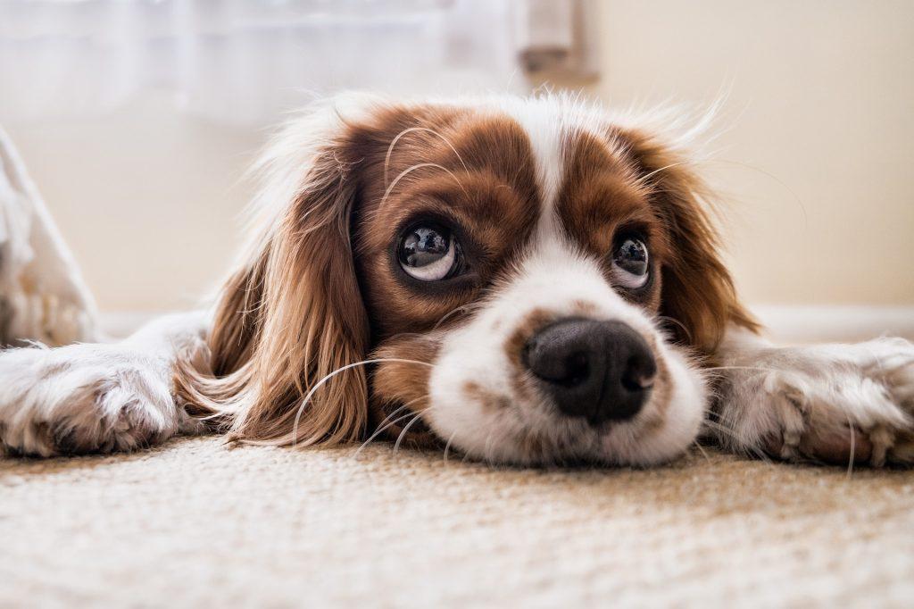 มีสัตว์เลี้ยงคู่ใจช่วยส่งเสริมสุขภาพจิตให้ดีขึ้น2 เกร็ดความรู้รอบตัว