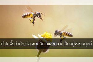 ทำไมผึ้งสำคัญต่อระบบนิเวศและความเป็นอยู่ของมนุษย์ เรื่องทั่วไป เกร็ดความรู้รอบตัว เทคนิคต่างๆ สาระน่าสนใจ ความสำคัญของผึ้ง