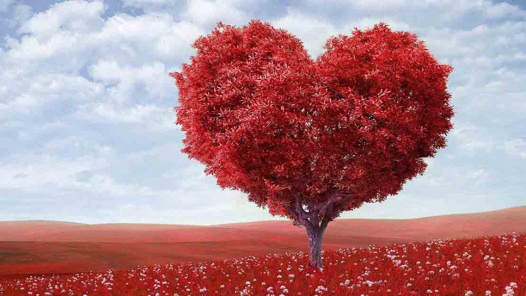 ความรัก คืออะไร เรื่องทั่วไป เกร็ดความรู้รอบตัว เทคนิคต่างๆ สาระน่าสนใจ ความรักคืออะไร